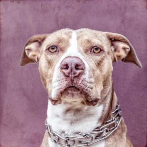 hundeportrait von peter jung