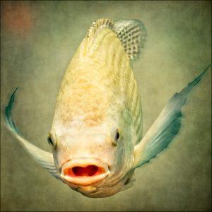 serie fische von susanne jung