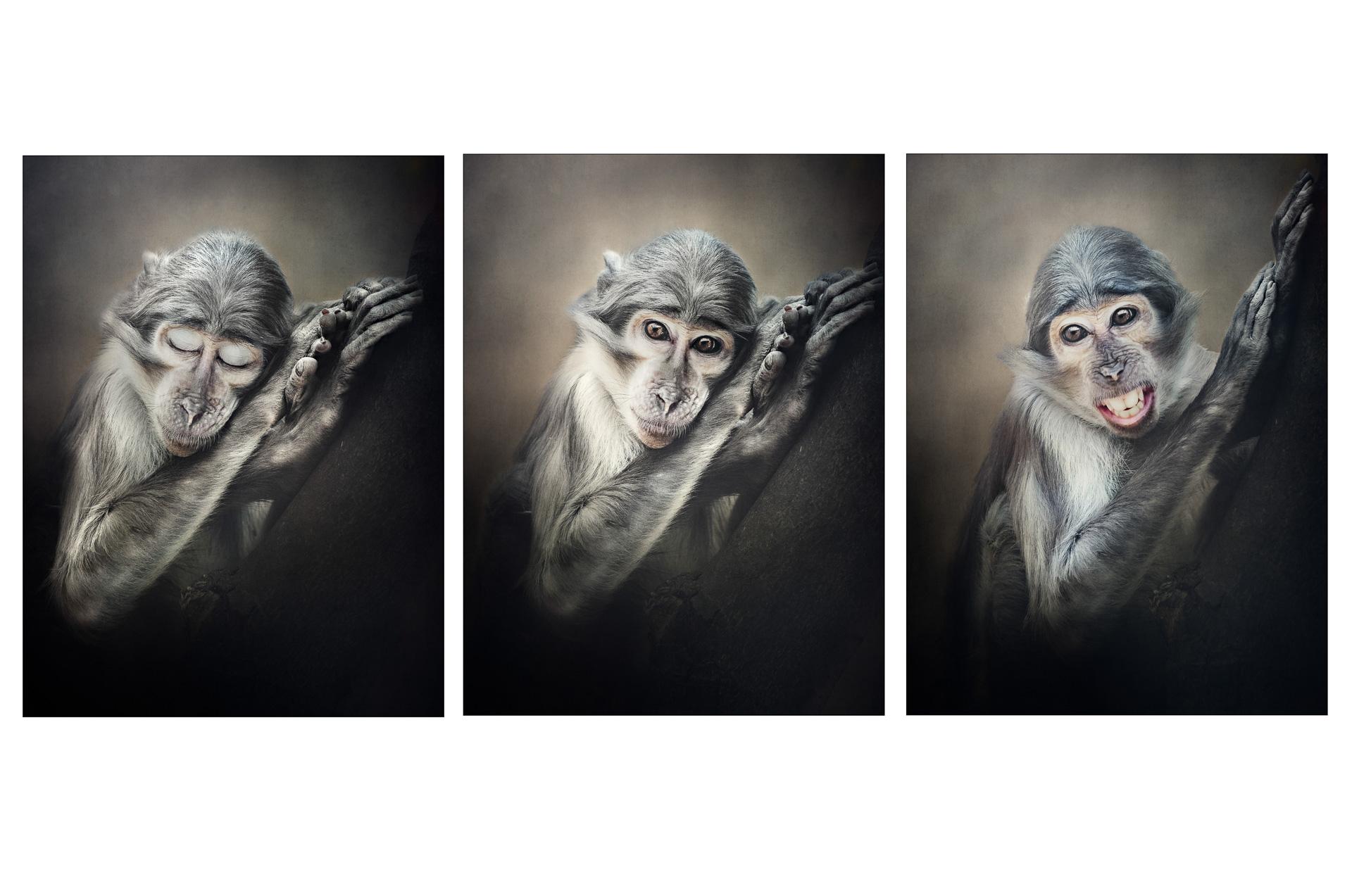 Serie Posing - Susanne Jung